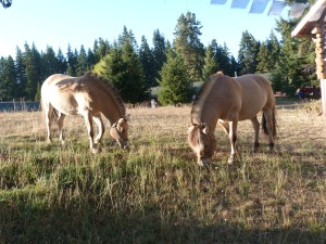Drader and Konall enjoying a snack near the cabin.