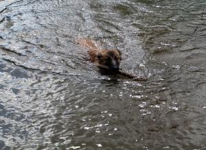 It's a duck! It's an otter! No, It's the sunny little Sundog!