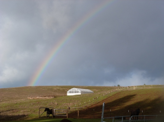 Spring rainbow today over the high tunnel and corral.